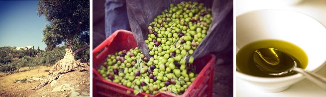 Huile d'olives naturelles de La Pangée
