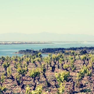 Vins naturels des Corbières